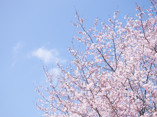 円満、退職、春